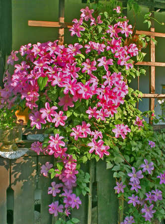 pergola with a pink flowers