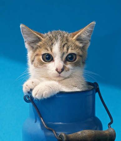 kitten sitting in blue milk can photo