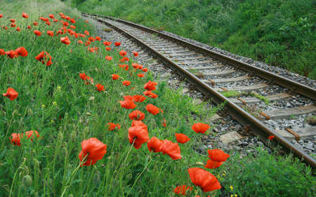 railroad with poppy flowers