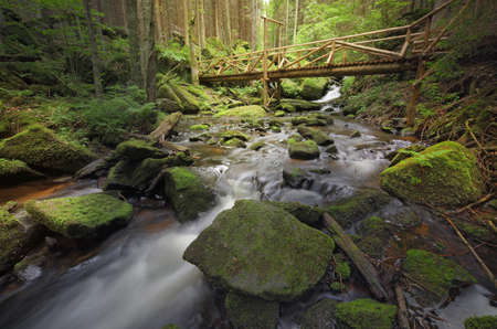 forest stony brook with a small wooden gangway Standard-Bild