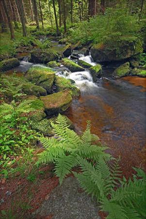small  brook with stones green vegetation and fern Standard-Bild