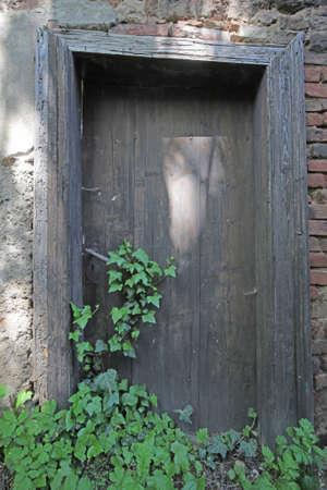 old grunge wooden door overgrown by ivy