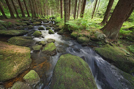 small brook with stones and green vegetation