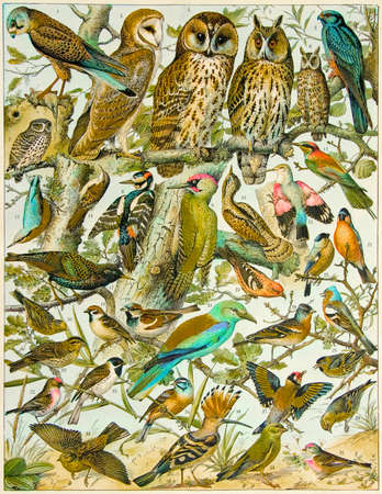 page from an old book - atlas of birds