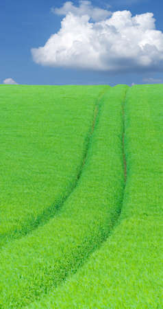 green lines: lines in green cereals