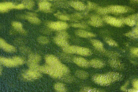 Green structure at the water surface created by water plant leaves. Standard-Bild