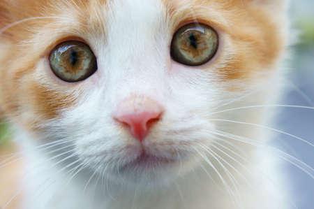 kitten fixed look close up