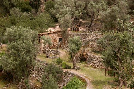 Small Finca with terraces and olive trees near Soller in Spain. Seen at the old pilgrims way to Monastir Lluc through the idyllic valley Torrent d'es Barranc (Majorca)