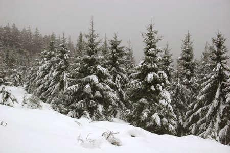 Schnee in den deutschen Harz-Bergen nahe Mt. Brocken  Stockfoto - 5960291