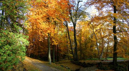 Autumnal trees at park Wilhelmshöhe in Kassel, Germany Stock Photo - 8172515