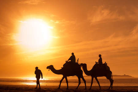 silhouettes of camels at sunset