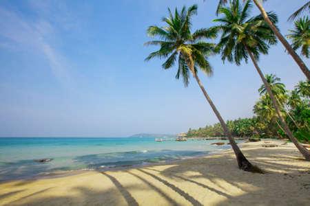 paradise beach: Palm trees on tropical paradise beach Stock Photo