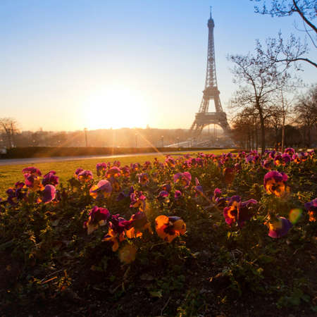unusual angle: flowers near Eiffel tower, Paris, France