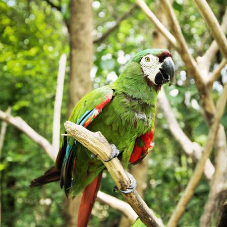 gold facial: tropical parrot