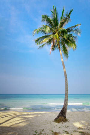 beautiful lonely palm tree on the beach
