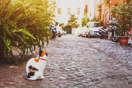 cat on the street in Rome, Italy Stock Photo
