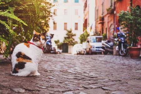 이탈리아의 집 근처 거리에 앉아있는 고양이 스톡 콘텐츠