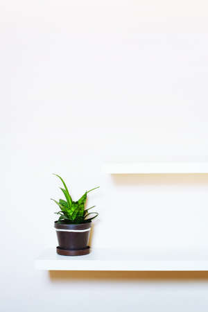 simple interior design, two shelves on the white wall and green plant in pot, with place for text Stock Photo