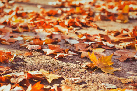 autumn background with yellow leaves and copy space, fall Фото со стока