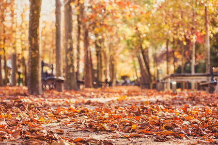 autumn park background, yellow leaves in fall season Stok Fotoğraf - 111084183