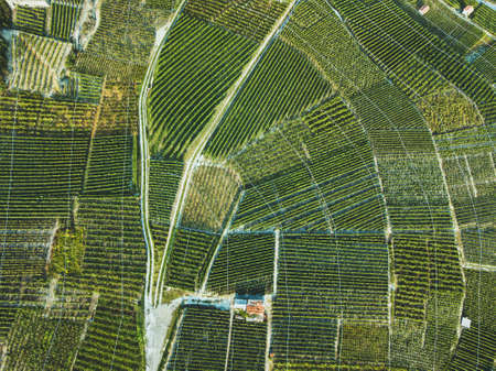 aerial view of green fields landscape from drone, beautiful wineyards, wine grape agriculture Фото со стока