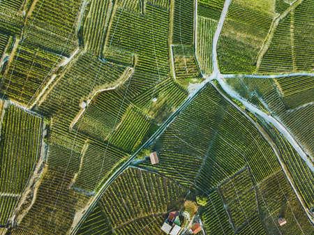 beautiful aerial landscape of wine yards, top view of grape plantation 免版税图像 - 111084053