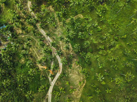 aerial view of dirt road in green palm trees tropical forest, exotic nature landscape top view from drone