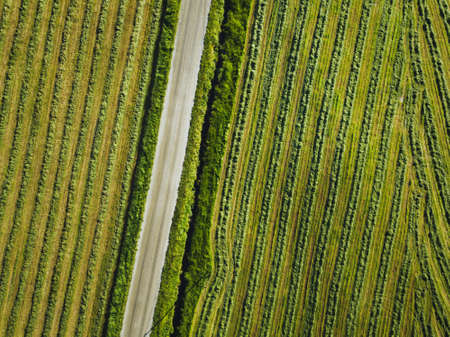 green field aerial texture, background with top view of road