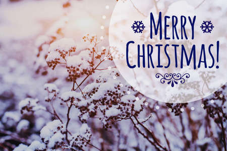 Merry Christmas greeting card on beautiful winter frozen landscape background with copy space