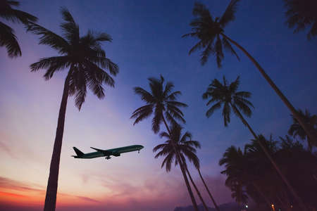 airplane taking off from airport in tropical country, silhouette of plane in the sky with exotic palm trees Фото со стока