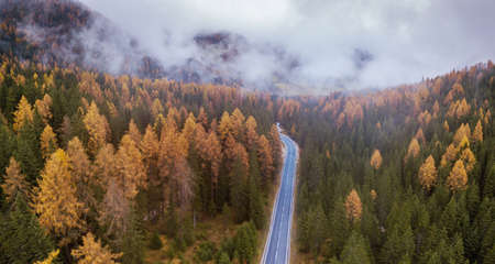 panoramic landscape of road in autumn forest, fall banner background 版權商用圖片