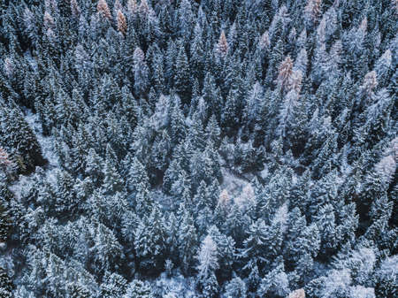 Beautiful winter forest aerial background view from above, pine trees covered by first snow in November. 版權商用圖片
