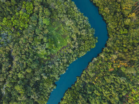 jungle forest aerial landscape, winding river view from above, nature and wilderness 版權商用圖片