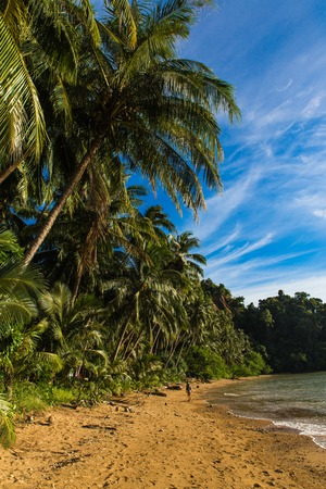 empty sunny Corong Corong beach in El Nido, Palawan province, Philippines with palms on background Imagens