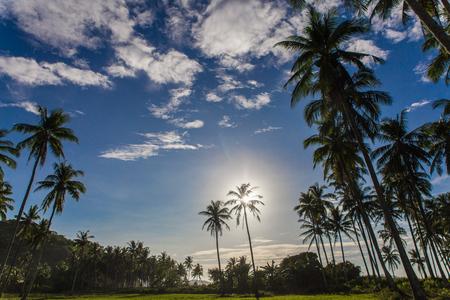group of palm trees in wild Safari beach in El Nido, Palawan, Philippines Imagens