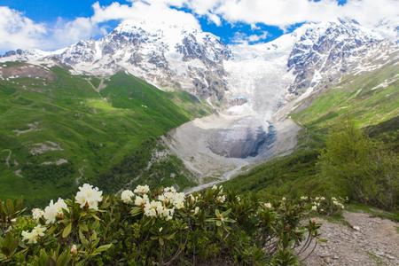 Adishi glacier with blue sky on background and white flowers on foreground in Georgia, Svaneti region Imagens