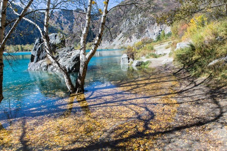 tree standing in water with leaves with shadow in Issyk lake in Kazakhstan Imagens
