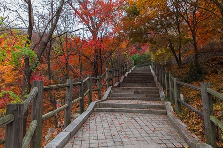 road in Namsan Park in Seoul surrounded by red and yellow autumn trees Imagens