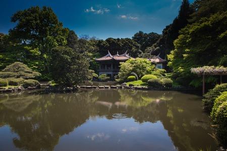 lake in Shinjuku garden in Tokyo, Japan. Sakura blooming season