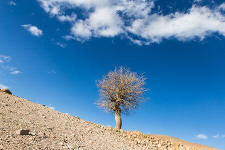 spring tree inancient village Meymand in Kerman province, Iran Reklamní fotografie