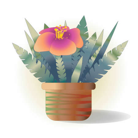 llustration of a pink flower in a pot with thick foliage. Illustration
