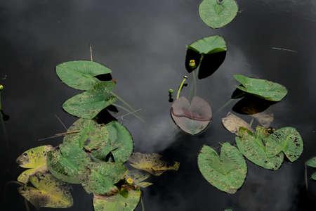 black: black lake Stock Photo