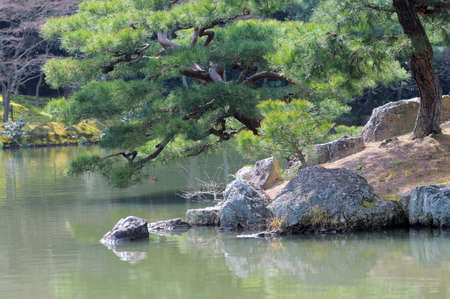 Jjapanese Black Pine trees with fresh growth cones looking into a lake. Picture taken in April by the Temple of the Golden Pavilion, Northern Kyoto, Japan Stock Photo - 8762702