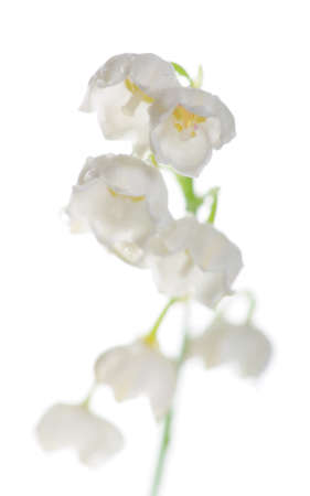 Lily of the Valley (Convallaria Majalis) isolated on white; focus on the top blossoms photo