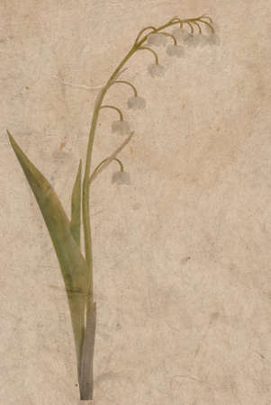 Old japanese paper background with Lily of the Valley (Convallaria Majalis) flower photo