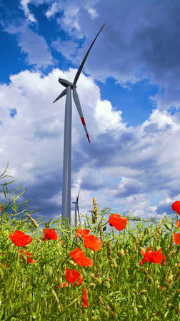 bio diesel: Poppy flowers with raps seeds and windmill against dramatic sky
