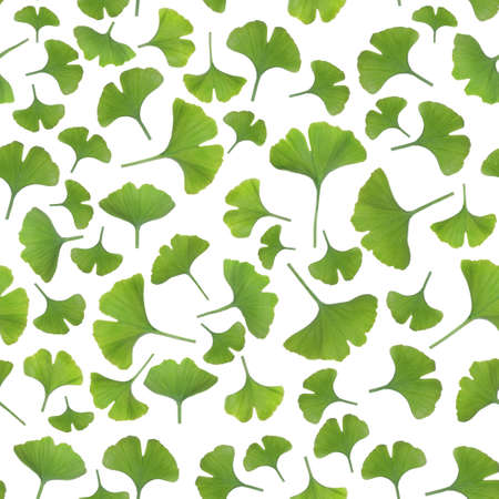 gingko: Young gingko leaves isolated on white background, seamless pattern