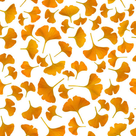 Yellow gingko leaves isolated on white background, seamless pattern photo