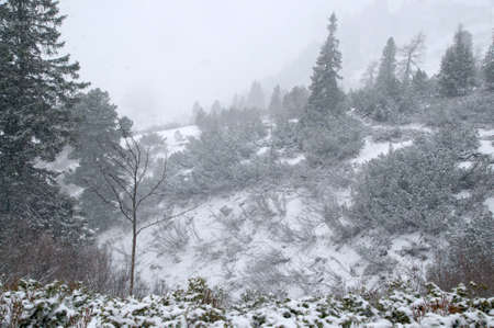 wheather: Snow storm in the Austrian Alps Stock Photo