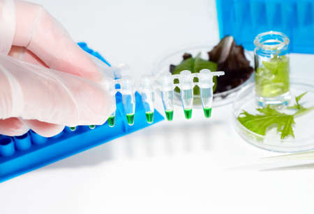 Scientific testing of salad leaves for signs of bacterial contamination Stock Photo